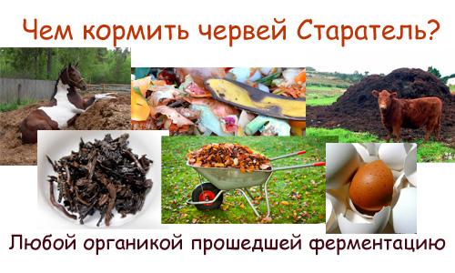 Чем кормить червей в домашних условиях 549