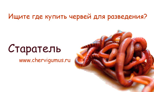 Купить червей Старатель