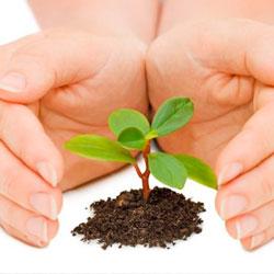 Повышение устойчивости растений к болезням
