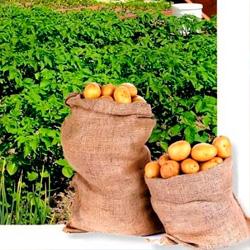 Применение биогумуса увеличит урожай