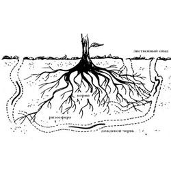 Развитие корневой системы растений