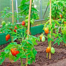 Выращивание эко овощей и фруктов