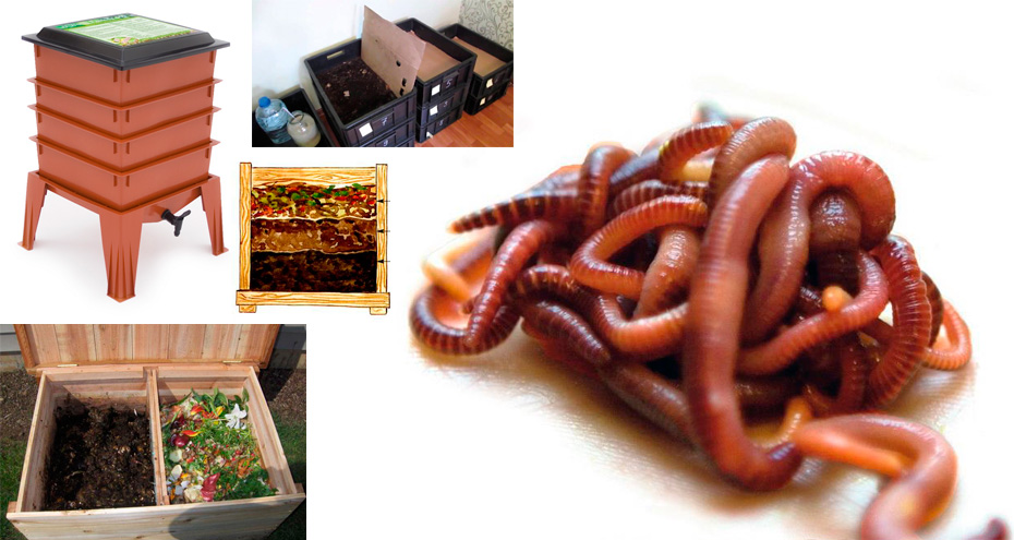 производство червей для рыбалки