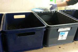 Разведение-червей-дендробена-дома в ящиках